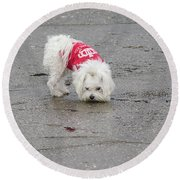 My Small Dog Round Beach Towel