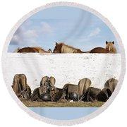 162669 Horse Walls Animals National Geographic Round Beach Towel
