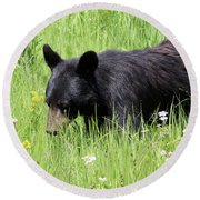 American Black Bear Yellowstone Usa Round Beach Towel