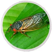 17 Year Periodical Cicada Round Beach Towel