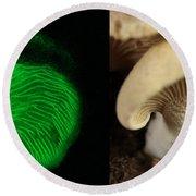Luminescent Mushroom, Panellus Stipticus Round Beach Towel