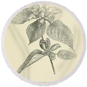 Vintage Botanical Illustration Round Beach Towel