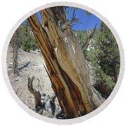 1n6956 Methuselah Tree Round Beach Towel