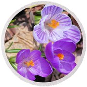 1st Flower In Garden 2010 Photo Round Beach Towel