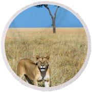 African Lioness Panthera Leo, Serengeti Round Beach Towel