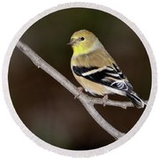 American Goldfinch Round Beach Towel