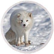 Arctic Fox... Round Beach Towel