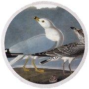 Audubon: Gull Round Beach Towel