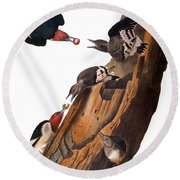 Audubon: Woodpecker Round Beach Towel