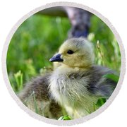Baby Goose Chick Round Beach Towel