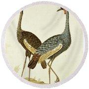 Balearica Regulorum Grey Crowned Crane, Robert Jacob Gordon, 1777 - 1786 Round Beach Towel