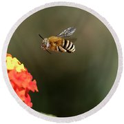 Bee, Bumblebee, Flying To A Flower, In Marseille, France Round Beach Towel