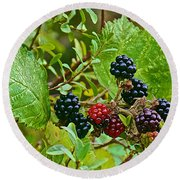 Berries In Vicente Perez Rosales National Park Near Puerto Montt-chile  Round Beach Towel