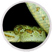 Blotched Palm Pitviper Round Beach Towel