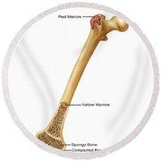 Bone Marrow And Tissue, Illustration Round Beach Towel