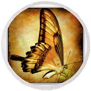 Broad Banded Swallowtail Round Beach Towel