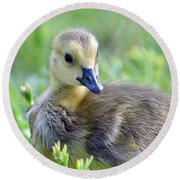 Canadian Goose Chick Round Beach Towel