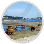 Cattle Scottish Highlanders, Zuid Kennemerland, Netherlands Round Beach Towel
