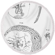 Chick Embryology, Malpighi, 1687 Round Beach Towel