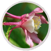 Columbine From The Songbird Series Named Robin Round Beach Towel