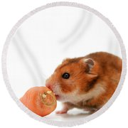 Curious Hamster Round Beach Towel