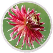 Dahlia Named Akita Round Beach Towel