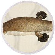 Duck-billed Platypus Ornithorhynchus Round Beach Towel