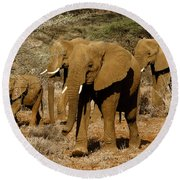Elephant Parade Round Beach Towel