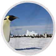 Emperor Penguin Round Beach Towel
