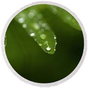 Fern Close-up Of Water Droplets  Round Beach Towel