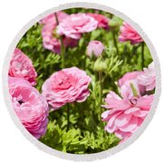 field of cultivated Buttercup  Round Beach Towel