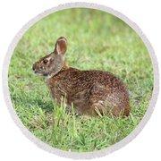 Florida Marsh Rabbit Round Beach Towel