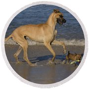 Giant And Tiny Dogs Round Beach Towel