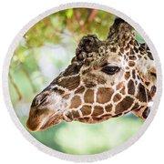 Giraffe Feeding On Green Leaves Of Lettuce Round Beach Towel