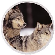 Gray Wolves Round Beach Towel