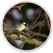 Great Tit Round Beach Towel
