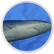 Grey Reef Shark Round Beach Towel