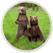 Grizzly Bear Arctos Ursus Round Beach Towel