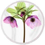 Hellebore Flowers, X-ray Round Beach Towel