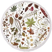 Herbarium Specimen Round Beach Towel