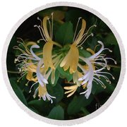 Honeysuckle Vine Round Beach Towel