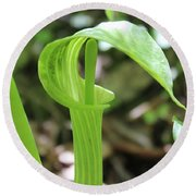 Jack-in-the-pulpit Round Beach Towel