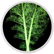 Kale, Brassica Oleracea, X-ray Round Beach Towel