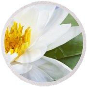 Lotus Flower Round Beach Towel by Elena Elisseeva