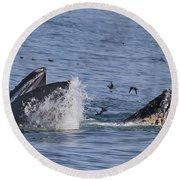 Lunge-feeding Humpback Whales Round Beach Towel