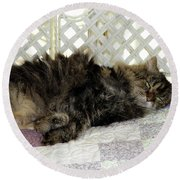 Maine Coon Cat Round Beach Towel