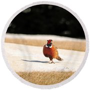 Male Ring-necked Pheasant Round Beach Towel