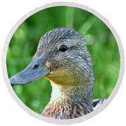 Mallard Duck Hen Round Beach Towel