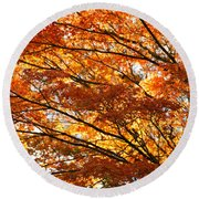 Maple Tree Foliage Round Beach Towel