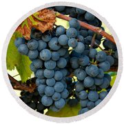 Marechal Foch Grapes Round Beach Towel